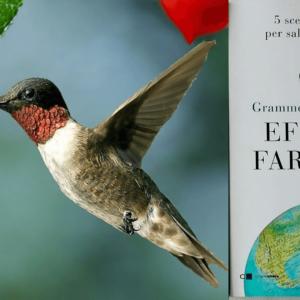 Prendersi cura del Pianeta: l'azione di un colibrì e il battito d'ali di una farfalla