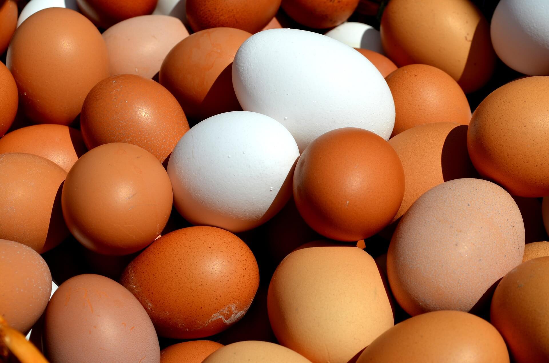 egg 2580904 1920